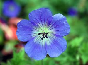 refreshedflower